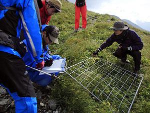 高山帯で植物の生態調査を進める静岡大の学生ら