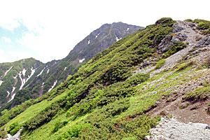 北岳(中央奥)に続く稜線。登山道脇では多くの高山植物が咲き誇る=南アルプス・北岳周辺