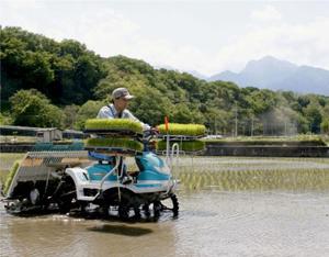 田植えをするコメ農家。甲斐駒ケ岳が育む豊富な水は県内有数の米どころを生んだ=北杜市武川町内