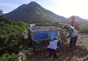 南アルプスの北岳でライチョウのヒナと母親を保護する取り組み(環境省南アルプス自然保護官事務所提供)