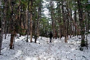 木漏れ日がそそぐ樹林帯を歩く登山者