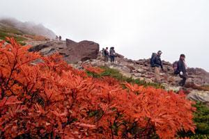 北岳山荘付近の稜線(りょうせん)で赤く鮮やかに色づくナナカマド
