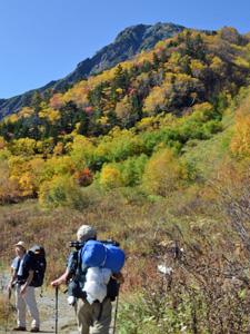 紅葉に染まる北岳を目指す登山客。紅葉は標高2000メートル付近が見頃を迎えていて、ダケカンバやナナカマドなどが黄色や赤に色づいている