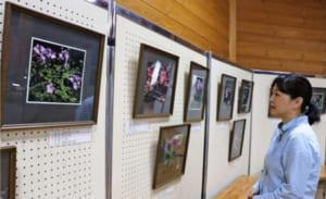 高山植物の写真の展示会=富士川町最勝寺