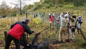 シカの食害からアヤメを守る柵の張り替え作業をする参加者=南アルプス・櫛形山