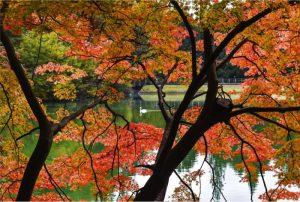 湖畔のモミジが紅葉した南伊奈ケ湖=南アルプス市上市之瀬